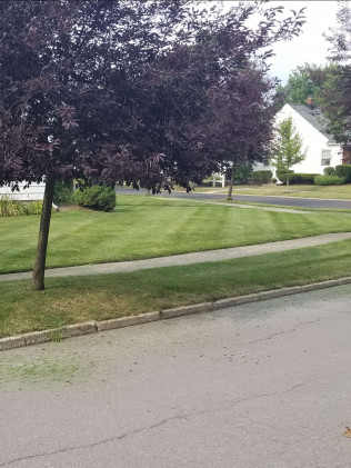 Lawn cutting Amherst NY